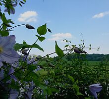 GROW VINE by X713 {by Sevn Thirteen}