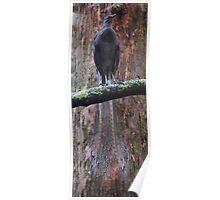 A bird's tale  Poster