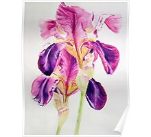 Glowing Irises Poster