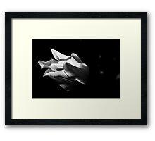 Tulip - B&W Framed Print