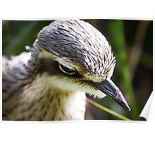 Bird at Melbourne Zoo Poster