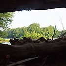 Looking through Driftwood by Bine