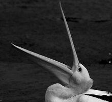 pelican 004 by Karl David Hill