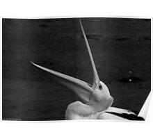 pelican 004 Poster