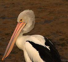 pelican 005 by Karl David Hill