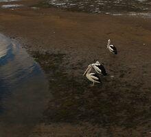pelican 006 by Karl David Hill