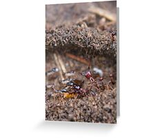 Small is Beautiful Greeting Card
