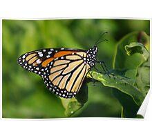 Good Morning Monarch Poster