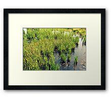 Green Natural Beauty Framed Print