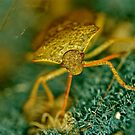 Little Green Bug by starwarsguy