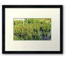 Wild Natural Beauty Framed Print