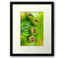 Nature's Abstract 2 Framed Print