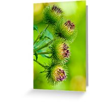 Nature's Abstract 2 Greeting Card