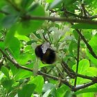 A busy bee, hiding under the tree... by shelleybabe2