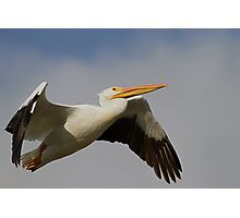 White Pelican Departure Photographic Print