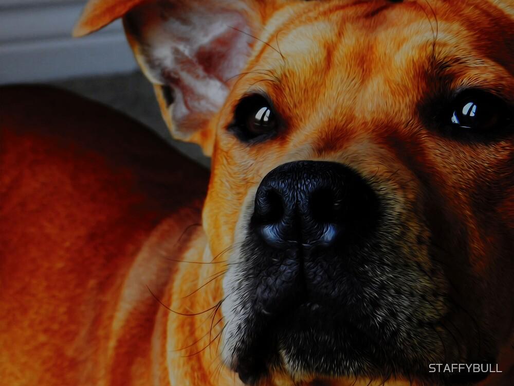 Staffordshire Bull Terrier. by STAFFYBULL