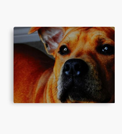 Staffordshire Bull Terrier. Canvas Print