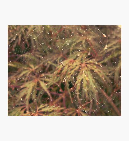 Spider Web + Rain Photographic Print