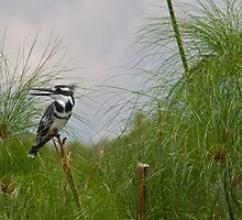 Peeping from the Pampas by James Godber