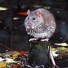 Rat by Magic-Moments