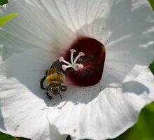 Bee emerging by Kate Farkas