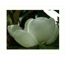 Magnolia in Tree.. Art Print