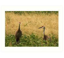 Pair of Sandhill Cranes Art Print
