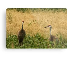 Pair of Sandhill Cranes Metal Print