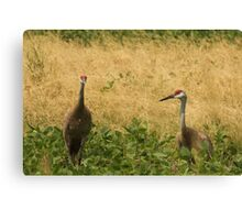 Pair of Sandhill Cranes Canvas Print
