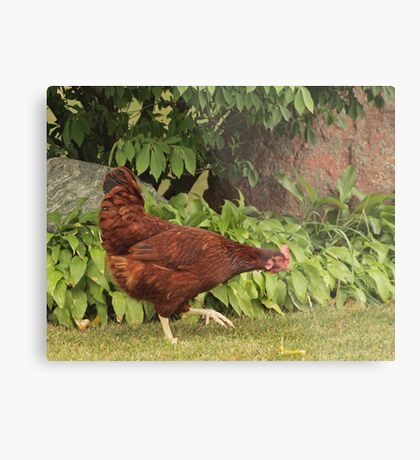 Red Rock Chicken Metal Print