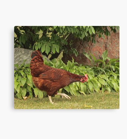 Red Rock Chicken Canvas Print