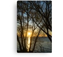 Golden Willow Sunrise Canvas Print