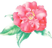 Lady vansittart (Camellia japonica) by Terry Bailey
