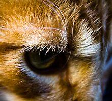Eye of the Beast by jwilsonholmes