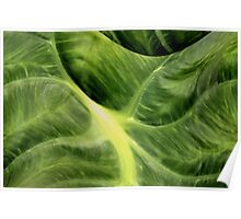 Elephant Ear Abstract Poster