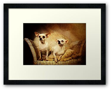 Chihuahua and the Friendship Message by Corri Gryting Gutzman