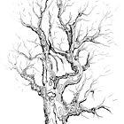 Abstracted oak Study by Regina Valluzzi
