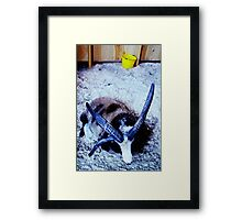Ram with yellow bucket Framed Print