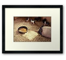A Square of Sunlight Framed Print
