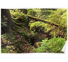 The hidden creek Poster