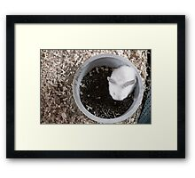 Bunny Bowl Framed Print