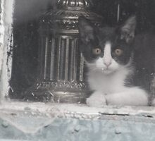 Watcher in the Window by Arla M. Ruggles