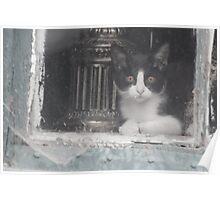 Watcher in the Window Poster
