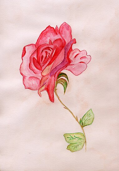 A Blooming Rose by Anne Gitto
