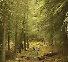 Enchanted Forest by Terry Bailey