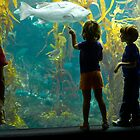 Birch Aquarium by photosbytony