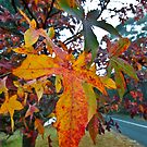 Autumn Leaves by William Goschnick