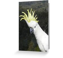 Cocky got a surprise. Sulphur-crested Cockatoo - Cacatua galerita Greeting Card