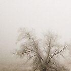 Misty Morning by Jason Thomas