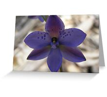 Spotted Sun Orchid - Thelymitra ixioides Greeting Card